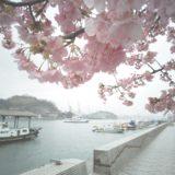 2月29日 春、尾道